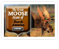 The great moose hunt contest